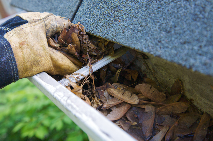 Use gutter covers to prevent critters from doing more damage in the future