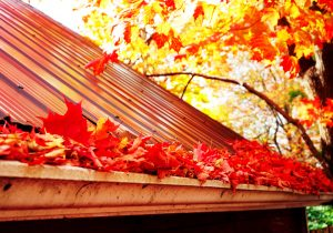 Gutter Leaves